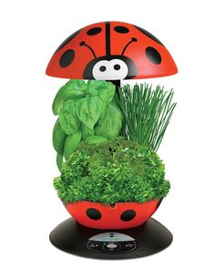 Miracle-Gro AeroGarden 3-Pod Indoor Garden with Gourmet Herb Seed Kit, Ladybug >>> Click image to review more details.