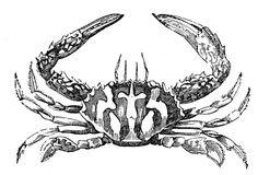 4 Stück Storm Swimming Crab