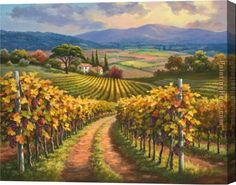 Sung Kim Vineyard Hill I Stretched Canvas Painting for sale ...