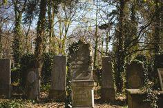 #photography #photostory #jewishcementery #poland #sunlight #ivy #antique #monumental