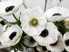 """33 Likes, 1 Comments - Hillbilly Queen Rainy Diane (@rainbowdazen) on Instagram: """"Old ball out had me at hello.... #anemones"""""""