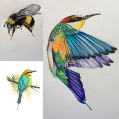 What's a bee without a bee eater. Here in Australia we don't have the lovely humming bird but we do have the colourful bee eater #aminalart #pencildrawing #artshare #creative_animalart #colourpencil #art_empire #art_collective #art_realistique #artfido#nawden #colourpencil #iglobalpics #bouchac #talnts #animalcreatives #animalart #birdart#fbfeeling