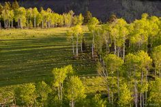 Aspen Evening, San Juan Mtns., CO, May  by Jack Brauer