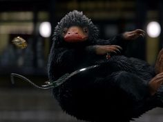 niffler fantastic beast | The mischievous Niffler has a thing for shiny jewels. He stars in the ...