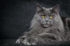Blue queen. by Robert Sijka on 500px