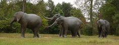 http://2.bp.blogspot.com/_UxnGdv5Psgo/TKL8OjInUNI/AAAAAAAAFvM/O4Mv0ohpGvU/s1600/elephant+sculpture.jpg