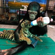 Animals or not...they understand the meaning of nurture...much more than some humans...