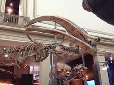 Washington museo scienze naturali