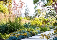 Immerse yourself in the wild beauty of photographer Claire Takacs's new book, Australian Dreamscapes. Words by Georgina Reid. Images by Claire Takacs Immerse yourself in the wild beauty of photographer Claire Takacs's new book, Australian Dreamscapes Australian Garden Design, Australian Native Garden, Australian Plants, Australian Bush, Dream Garden, Garden Art, Indoor Garden, Outdoor Gardens, Bush Garden