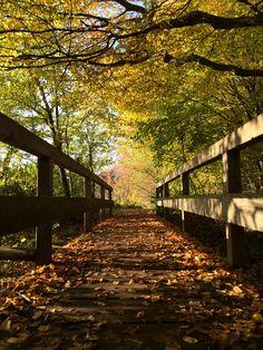 Der schöne Herbst