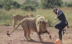 Kevin Richardson, the man who played football with lions