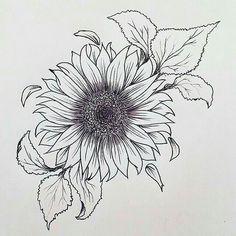 Resultado de imagen para vintage flower drawing girasol