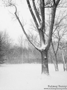 Ohio Blizzard December 26th, 2012 taken by Nutmeg Nanny