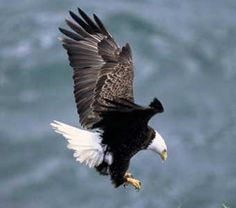Protect America's Eagles -- We must act quickly to urge Interior Secretary Jewell to reverse a recent decision to grant 30-year eagle permits to the wind industry.