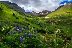 Rustler Gulch in the Maroon Bells Wilderness Area just outside Crested Butte