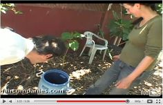 composting toilet aftermath   Composting Toilets and How To Handle Humanure The Simple Way