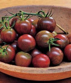 Tomato Black Pearl Hybrid