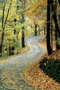 Autumn Road Percy Warner Park in Nashville...and this is why Tennessee is the prettiest place in the whole wide world :)