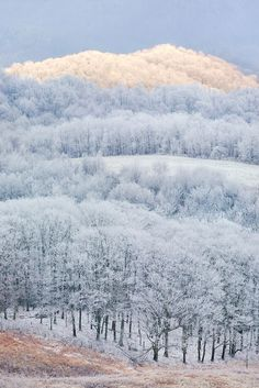 North Carolina and Tennesee near Hot Springs http://www.pinterest.com/socialwebdesign/pins/