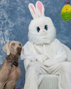 """My mom: """"If you guys aren't busy tomorrow morning we're taking Grayson to an Easter egg hunt and he's getting his picture with the Easter bunny!"""" Grayson is our family dog."""