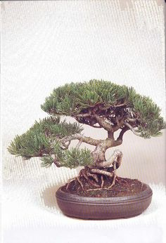 An Introduction to Bonsai: History, Cultivation and Size Classifications. Bonsai Garden, Ancient Art, Shrubs, History, Plants, Gardens, Old Art, Historia, Outdoor Gardens