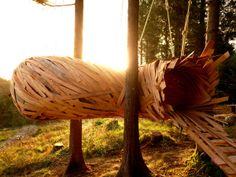 Cocoon, Hooke Park, Design & Make Programme 2013, Architectural Association AA, School of Architecture