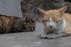 尾道で会った猫
