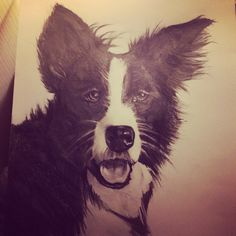 A3 pencil portrait of border collie
