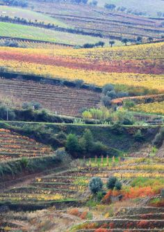 Vinhas D'ouro, Portugal