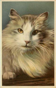 1930s Close Up Long Hair Cat Vintage Postcard