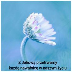 Jehovah, Study, Words, Nature, Flowers, Plants, Pictures, Bible, Photos