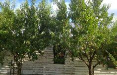 Cum sa tunzi un pom fructifer? Sidewalk, Gardens, Plants, Agriculture, Side Walkway, Outdoor Gardens, Walkway, Plant, Walkways