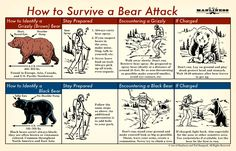 How to Survive a Bear Attack: An Illustrated Guide