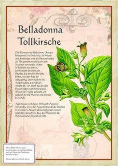 Tollkirsche http://www.kraeuter-verzeichnis.de/