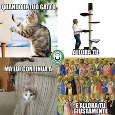 La fantastica logica dei gatti. #commentimemorabili Funny Video Memes, Funny Tweets, Jeff The Killer, Cool Pets, Vignettes, Funny Pictures, Funny Pics, Cute Animals, Jokes
