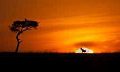 Kenia Africa, Celestial, Sunset, Outdoor, Kenya, Outdoors, Sunsets, Outdoor Games, The Great Outdoors