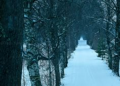 Birch alley by Petri Forss on 500px