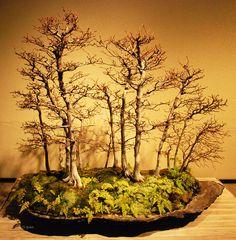 "Bonsai ""Forest"" #bonsai #gardening"