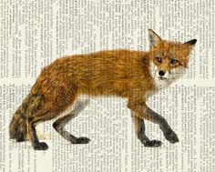 fox print red fox on vintage dictionary page vintage by FauxKiss, $10.00