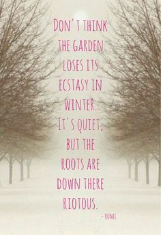 """""""Don't think the garden loses its ecstasy in winter..."""" Rumi"""