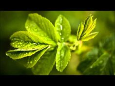 Abraham Hicks :: What you MUST KNOW about personal abundance - YouTube