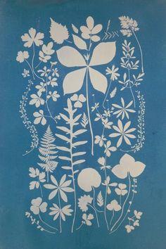silhouettes, botanics. screen print.