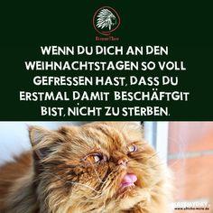 Ultichá Mate   Mate My Day   Lustige Sprüche #funny | ULTICHÁ MATE ° Bro  Spruch, Weisheiten U0026 Funny Stuff° | Pinterest