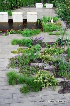 Pavers brought into landscape. No this much.  Interesting how they can define beds.