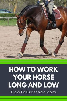 Working your horse 'long and low' refers to a technique that is used by dressage riders to develop their horse's relaxation and suppleness. Horseback Riding Tips, Horse Riding Tips, Horse Tips, Riding Gear, Horse Riding School, Work Horses, Show Horses, Horse Training, Training Tips