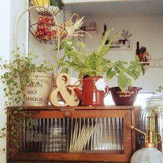 3Coins/セリア/3コインズ/観葉植物 /植物/NO GREEN NO LIFE…などのインテリア実例 - 2014-12-08 23:02:33   RoomClip(ルームクリップ)
