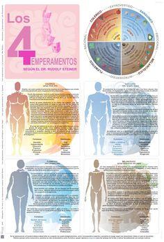 Los 4 temperamentos según el Dr. Rudolf Steiner