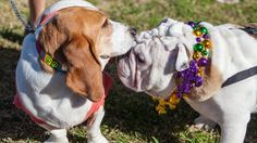 https://flic.kr/p/dSnQ6C | Krewe of Barkus and Meoux Pet Parade, Shreveport, LA | Dogs dressed for Mardi Gras prepare to march in the 15th Annual Krewe of Barkus and Meoux Pet Parade, an annual Mardi Gras event held in downtown Shreveport's RiverView Park. For more information on the Krewe of Barkus and Meoux Pet Parade, visit www.animalkrewe.org.