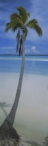 Palm tree on the beach, One Foot Island (Blue), Aitutaki, Cook Islands Poster Print by Panoramic Images (9 x 27)