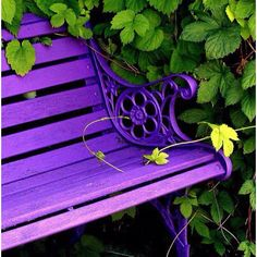 Purple park bench.. I'm gonna paint me a purple park bench, so pretty